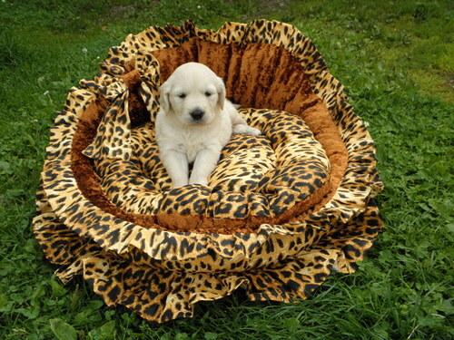 model-Luxusní sofa  pro psy,kočky i panenky,