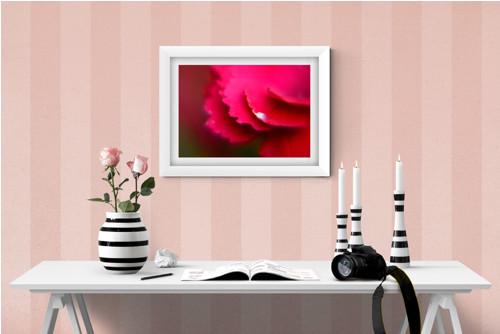 Červeno-růžová květina fotografie 30x20