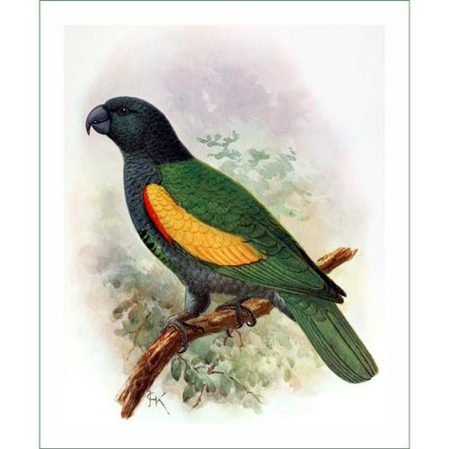 papoušek (13) - J.G.Keulemans  (látkový panel)
