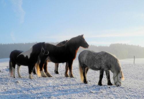 Na pastvinách v zimě kdo obstojí?