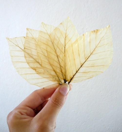 Skelet listů - béžový