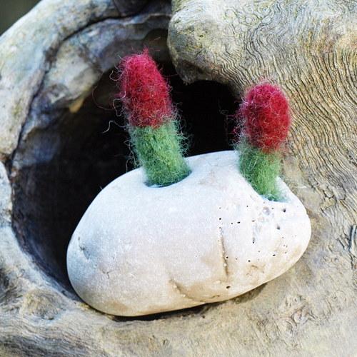 Ze série: kvetoucí kameny