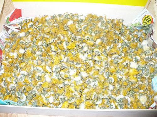 Pampeliška - květ 10g