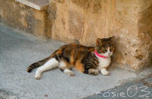 Kočka z ostrova Rhodos