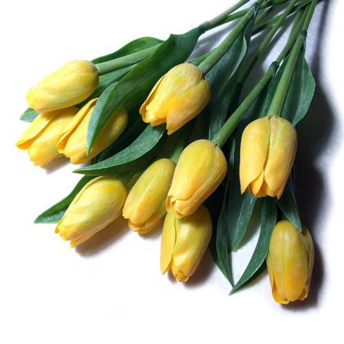 Tulipán žlutý