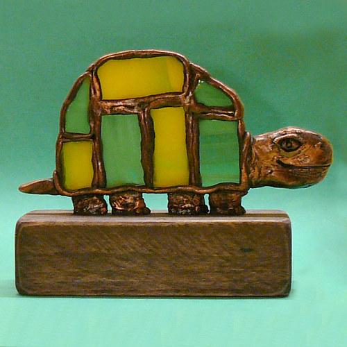 Želva Casiopea