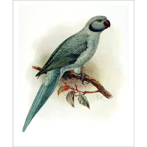 papoušek (14) - J.G.Keulemans  (látkový panel)
