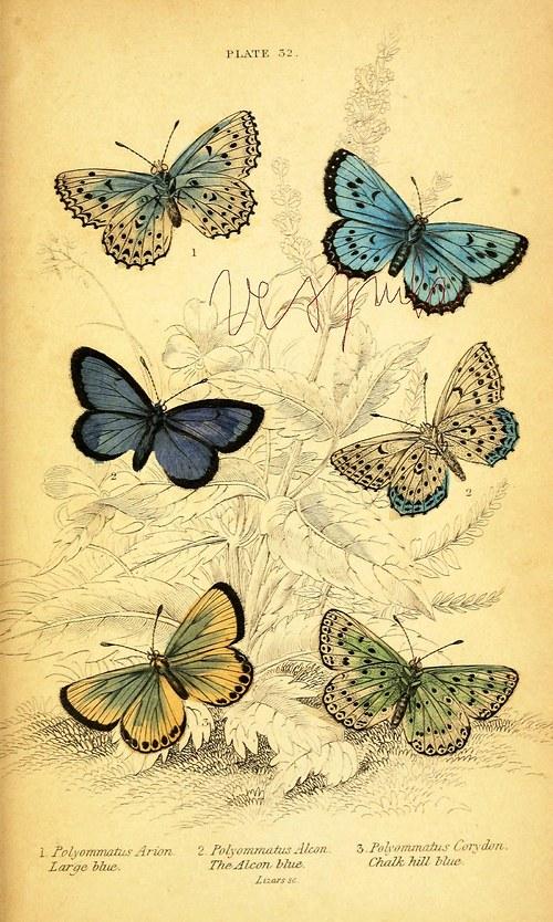Motýli II