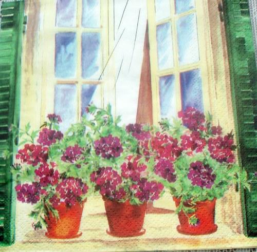 Pelargonie v okně