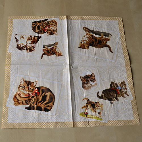 Ubrousek - Kočky a koťata