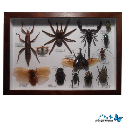 Sbírka hmyzu