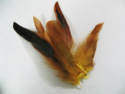 Žlutočerné peří
