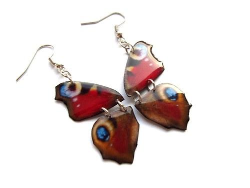 Motýlí křídla - babočky