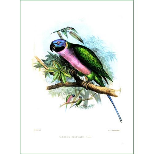 papoušek (15)  (látkový panel)