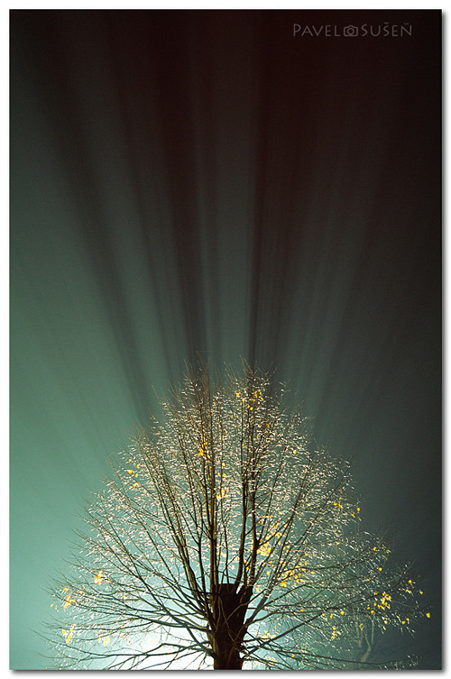 Strom světla