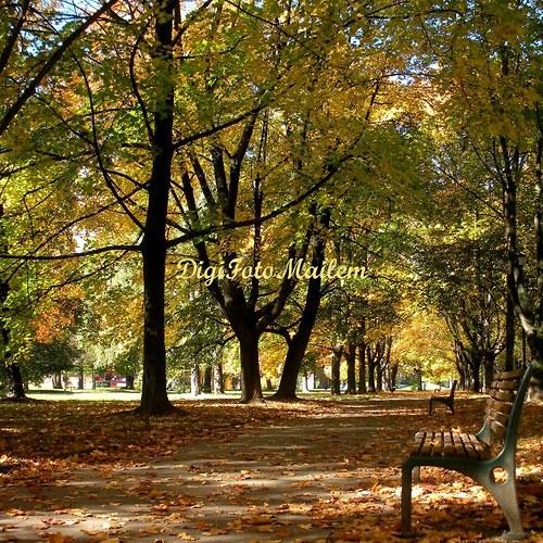 Procházka podzimní alejí I