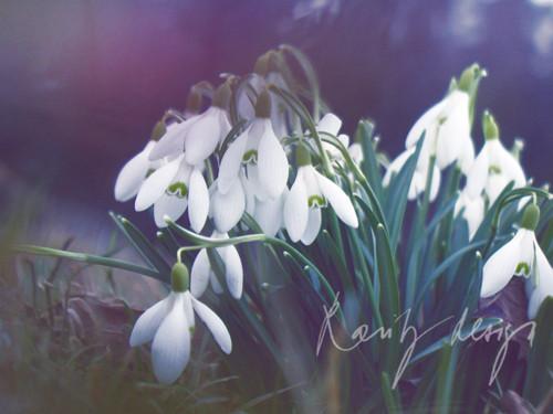 Spring IX.