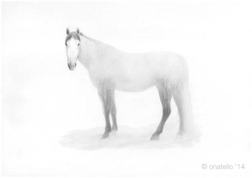 Equine Element - Mist