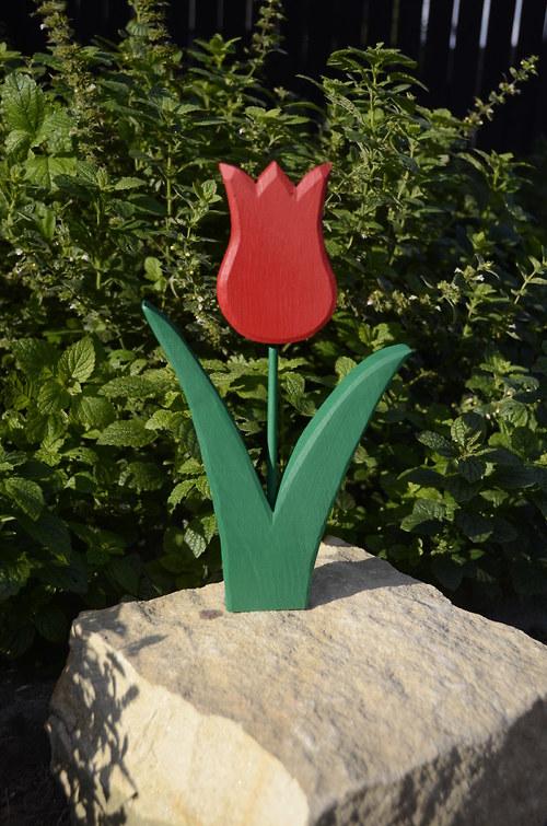 Tulipán - červený