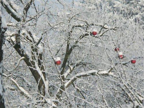 Jablka s čepicí