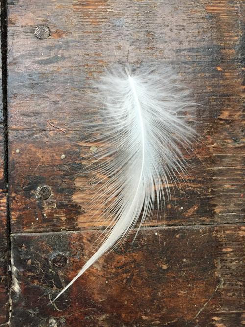 Peří z volavky - bílé 2ks