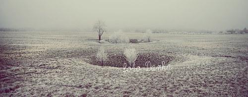 šedivá zimní krása panorama....