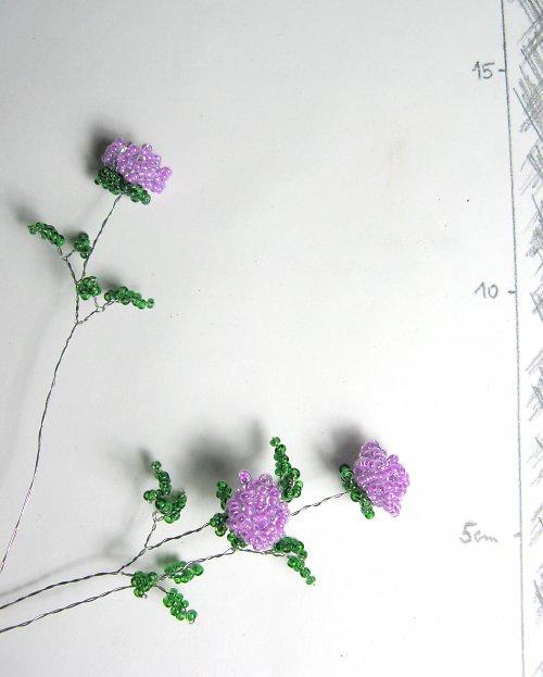 Růže korálková fialová