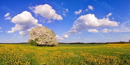 Těšíte se na jaro? :)