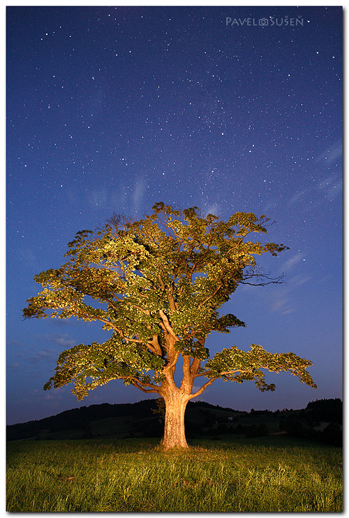 Milky Way Tree