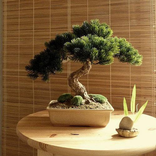 Umělá bonsaj