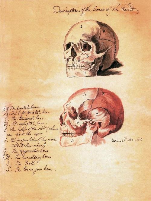 Lebka, anatomie