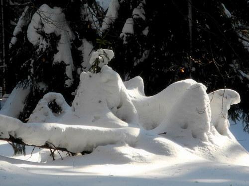 V zimě ... v Orlických horách