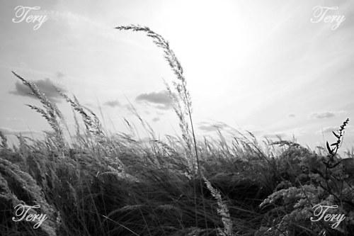 Stébla trávy v západu slunce