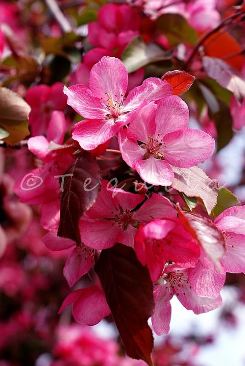 Květen v růžovém