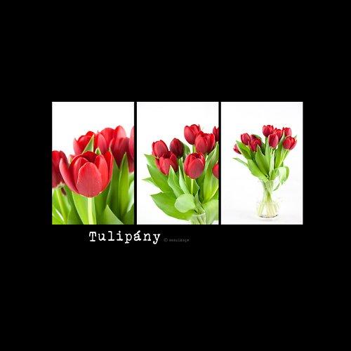 I ♥  tulips!