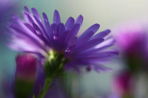 V říši květin