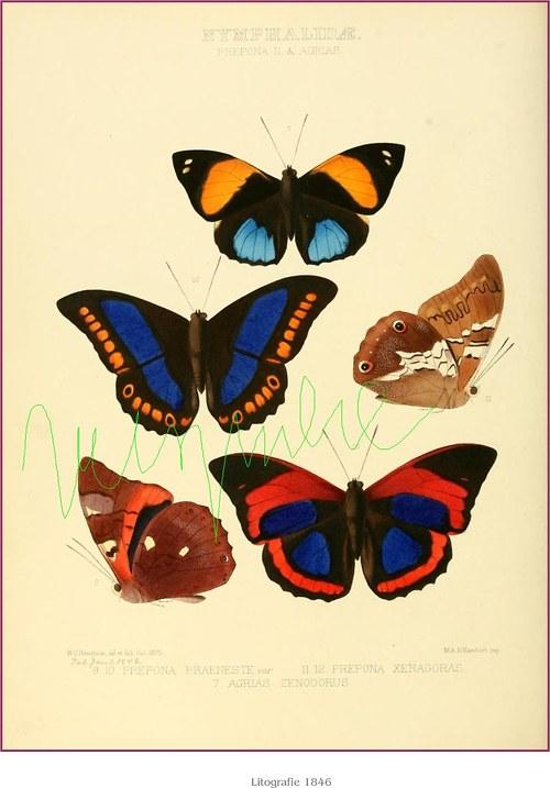 Motýli  VI