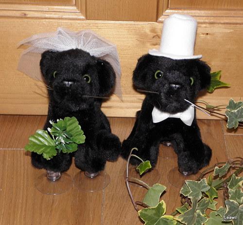 Svatební černí panteři (pumy)