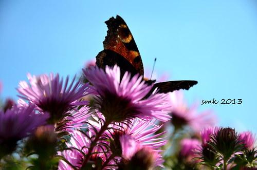 Motýl - autorská fotografie