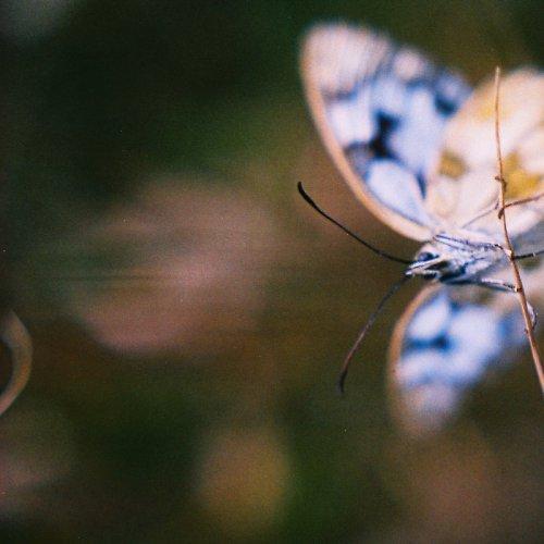 ...motýl...