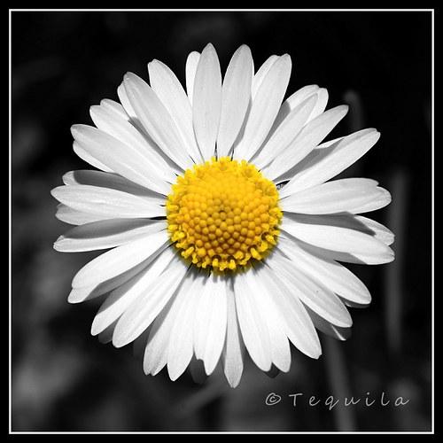 Krása jednoduchosti