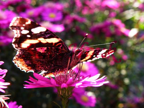 Motýlí kouzlo
