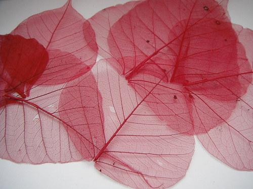 skeletový list-červený