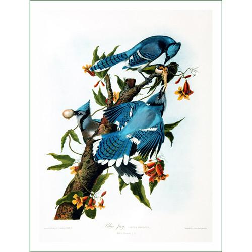 ptáci (34)  (látkový panel)