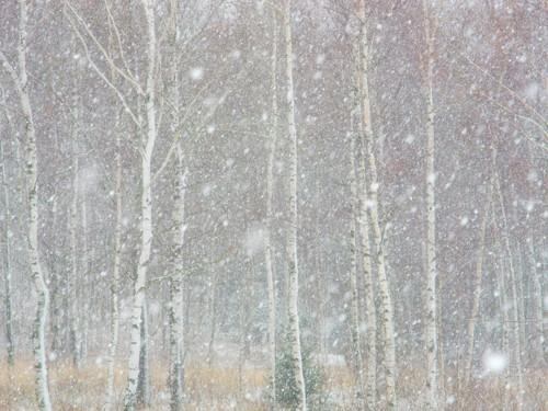 Vánoční, novoroční přání, pohlednice zima ˘