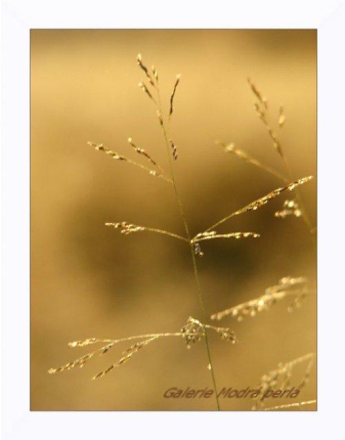 zlato v lukách ll. - autorská fotografie
