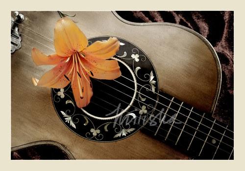 Lilie a kytara - fotografie