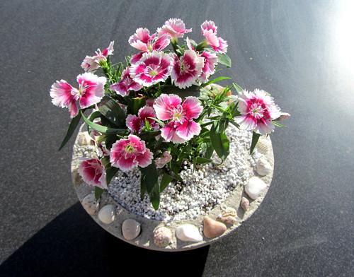 Malý betonový květináč s mušlemi