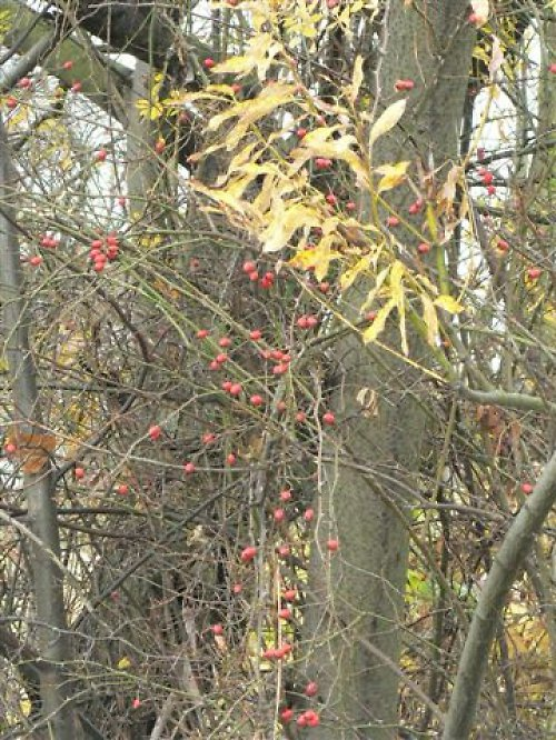 Podzimní pestrost