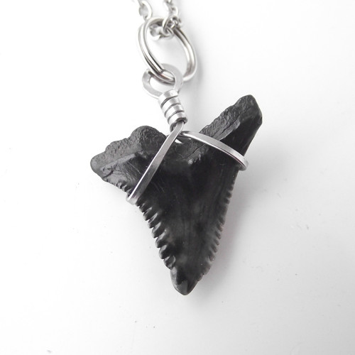 Zub žraloka,úžasný kousek + řetízek  - chir. ocel